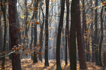 Trees in the forest in Autumn.