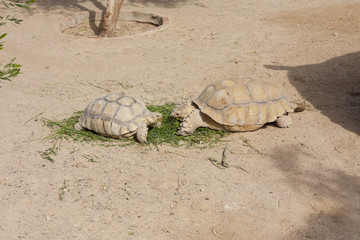 Turtles Sunning photo