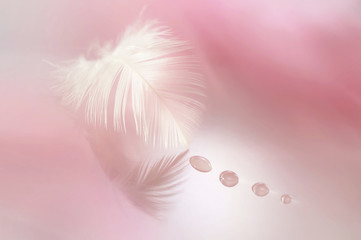 Beautiful white feather with drops on a blurred background of pink.