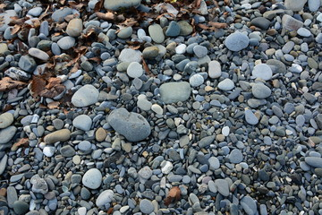 pebble gray yellow leaves