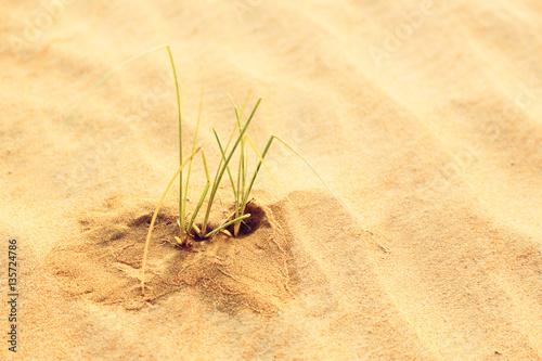 how to grow grass in minecraft desert