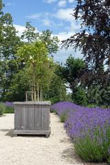 Blühender Lavendel und Holzkübel an einem Fußweg