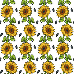 Pattern with sunflower on white background