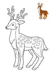 Coloring book, Deer