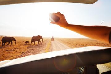 Tourist taking photo of elephants crossing road
