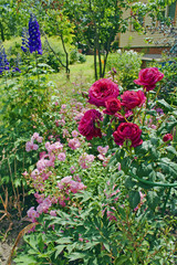 Flowerbed with beautiful roses and other flowers in the garden