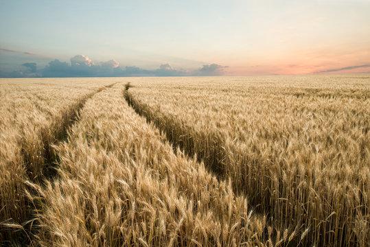 Scenic road through wheat field