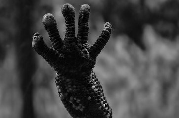 Hand of Lizard