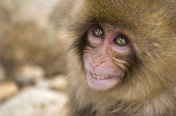 Close Up of a Young Monkeys Face
