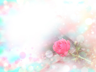Pink rose pink and blue bokeh and white copy space background