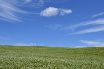 草原と青い空