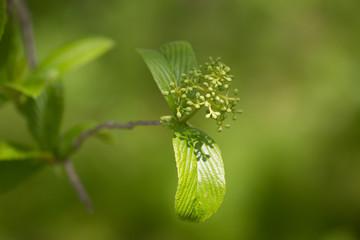 新緑に芽吹く