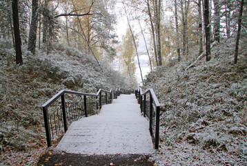 Stairs leading down to in siberian frosen wood