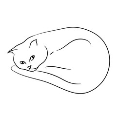 lying curled cat of monochrome vector illustration