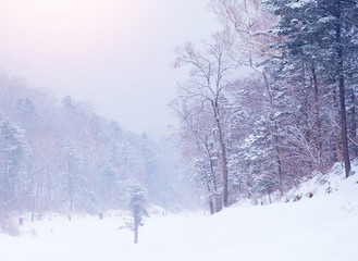 winter landscape with snow covered trees. Winter forest. Winter background.