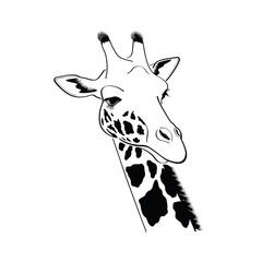 Giraffe head - illustration