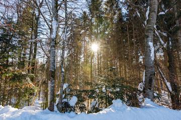 Foresta Bavarese in inverno