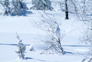 Beautiful winter landscape with snow covered trees, Altay