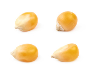 Single corn kernel isolated