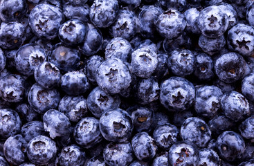 closeup fresh picked blueberries