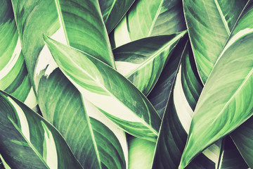 Fresh tropical Green leaves background Wall mural