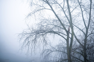 trees in foggy winter landscape scenery