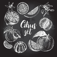 Hand drawn set of different kinds of citrus fruits.Food elements collection for design, Vector illustration. Poster on the chalkboard.