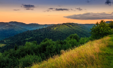 morning on the edge of a hillside