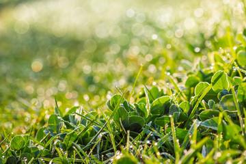 grassy meadow close up  in sun light
