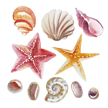 Set of Watercolor topical shell, starfish and pebble isolated on