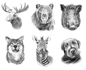 Set on animals on white  background. Illustration in draw, sketc