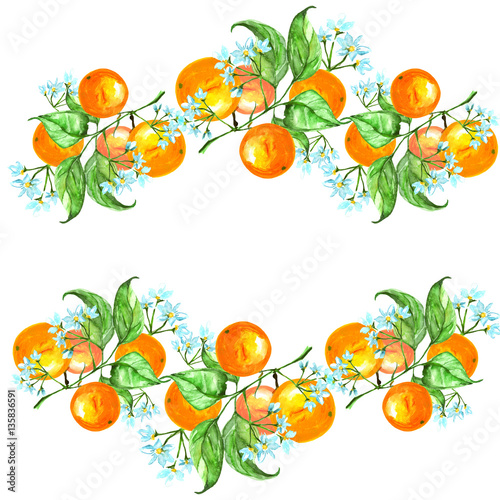 Vintage Border Watercolor Pattern Ornament Corporate Identity From Fruits Of Orange