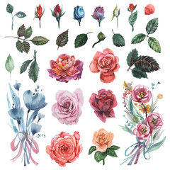 Hand painted watercolor Set of Flowers, isolated on white background