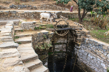 Noria of a water well moved by oxen.India.
