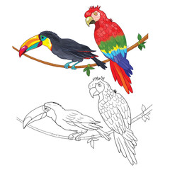 Toucan and parrot. Coloring page. Illustration for children. Funny cartoon characters