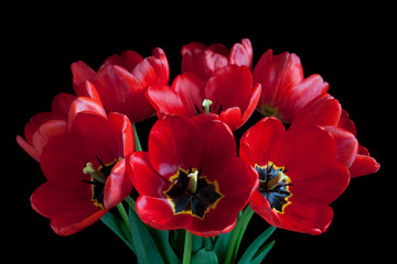 Bouquet of beautiful red tulips, spring  flowers on black background
