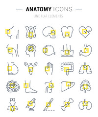 Set Vector Flat Line Icons Anatomy
