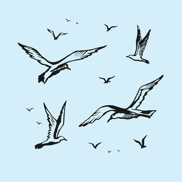 Seagulls vector sketch drawing by hand