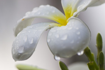 Flowers after a rain