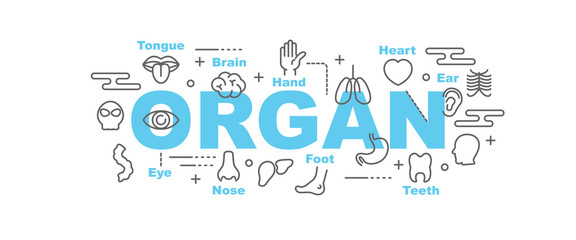 organ vector banner