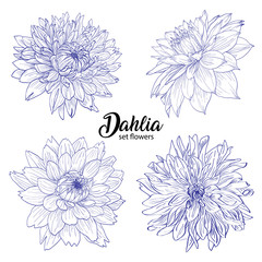 Pencil sketch hand drawn set Dahlia flowers. Sketching vector flowers illustration isolated on white background.