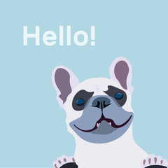 French Bulldog close-up with inscription - hello. Vector illustration of a dog greets