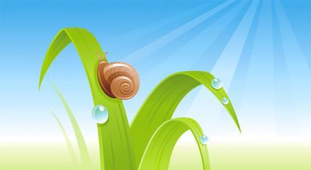 Spring snail banner border. Ecological concept. Environment friendly vector illustration. Summer landscape. Green grass, blue sky, insect. Springtime nature. Flat greeting card background design