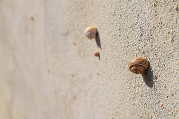 Snails stuck to a wall hiding from the sun