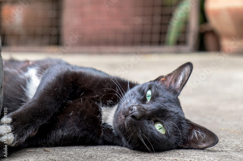 Cute Black Cat With Green Eyes Stretching And Relaxing On The Floor
