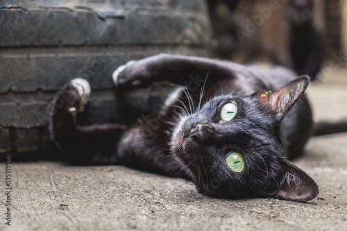Cute Black Cat With Green Eyes Relaxing On The Floor And Looking At
