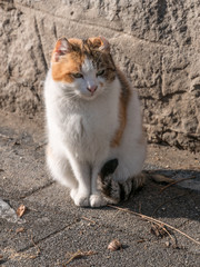 Portrait of beautiful ginger cat on asphalt. Red-headed cat.