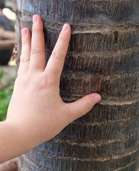Hand Touching Palm Tree in A Garden