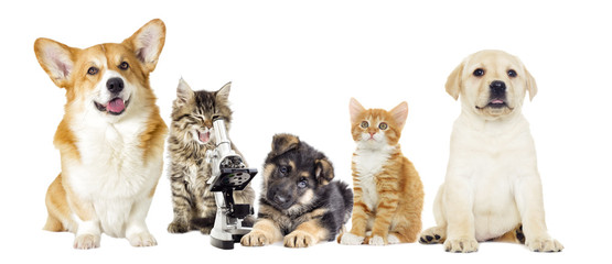 kitten and puppy and microscope