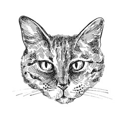 illustration portrait of cat